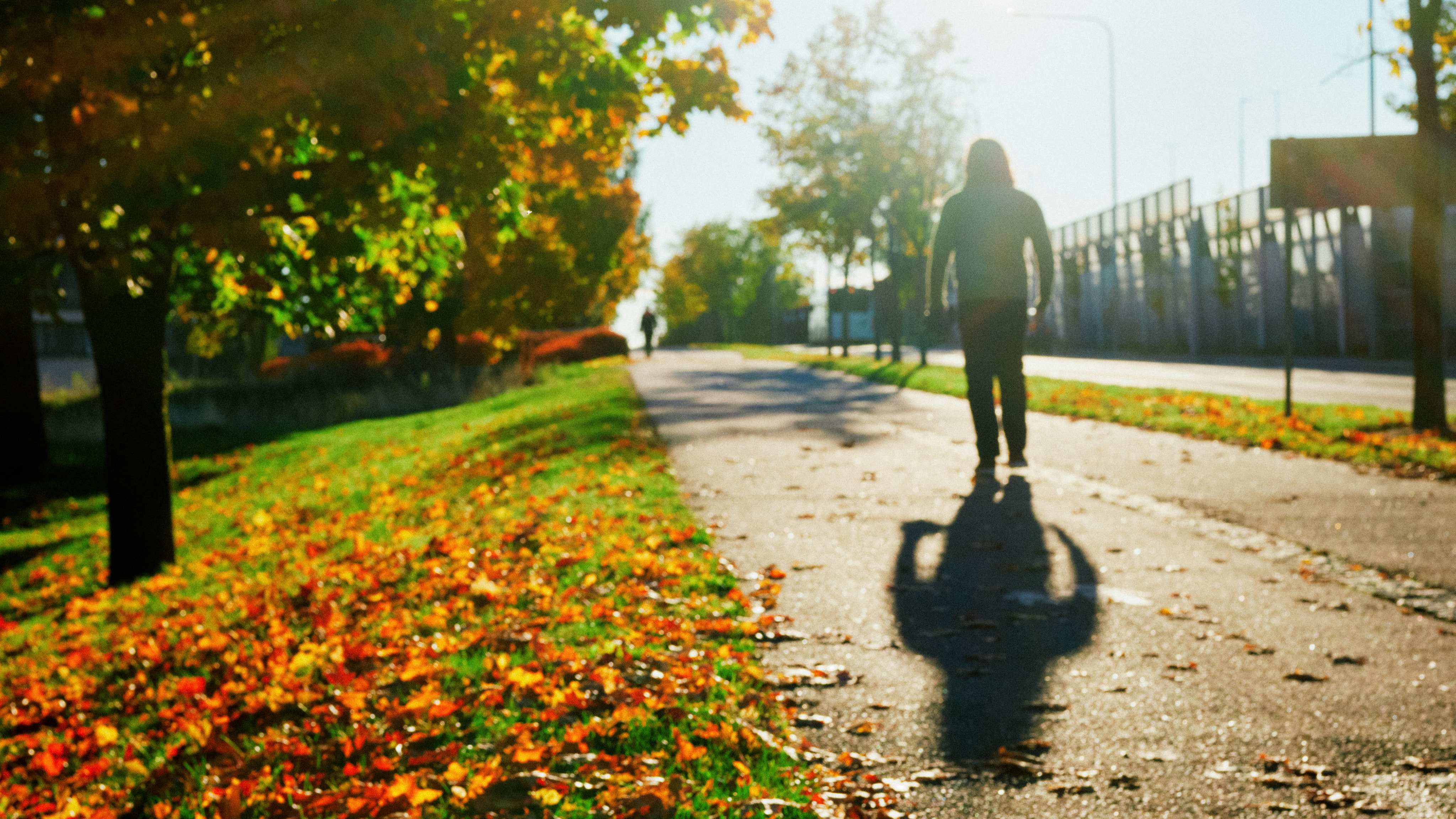 another autumn picture, against the light. silhouette of a walking person on the sidewalk on the right, bright orange maple leaves on green grass on the left