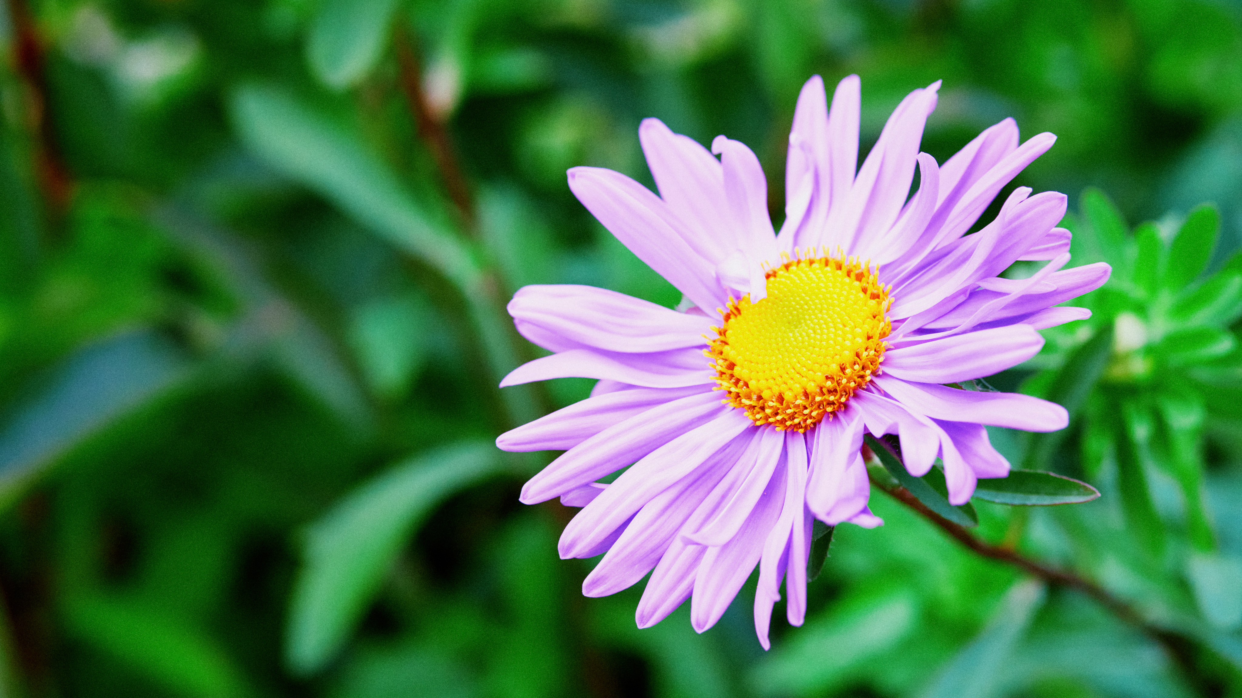 a purple flower against a green background